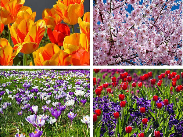 Spring flowers jigsaw puzzle