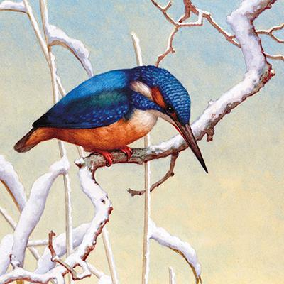 Charity Christmas Cards - Pack of 6 - Kingfisher On Snowy Branch