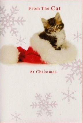 Christmas Card - From the Cat - Cat Sat In Santa Hat