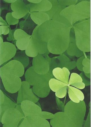 Good Luck Card - Lucky Clover