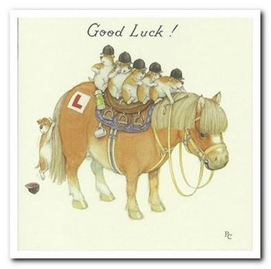 Good Luck Card - Driving Test Meercats On Horse