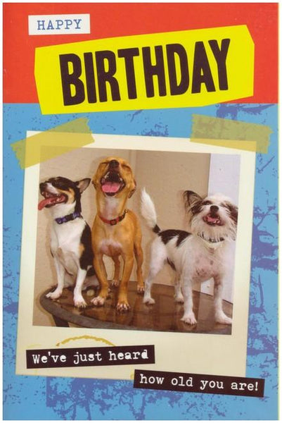 Humour card - Laughing Dogs