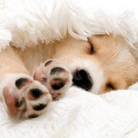 Blank Card - Little Puppy Sleeping