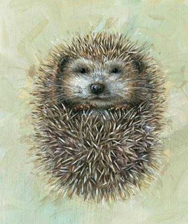 Blank Card - Hedgehog.