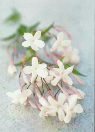 Wedding Card - Fresh Jasmine Flowers