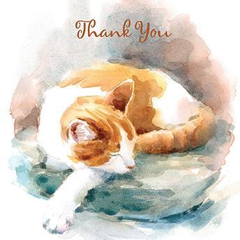 Thank You Card - Catnap
