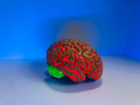 illuminated brain