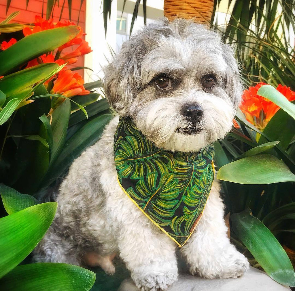 Havana Dog Bandana - Frank and Millie