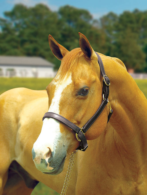 "Perri's 1"" Leather Turnout Halter"
