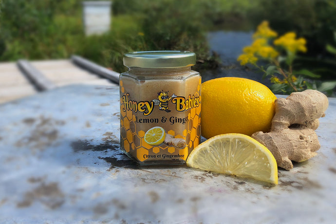 Honey Babies Lemon Ginger