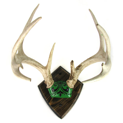 Custom Mounted 8 Point Deer Antlers