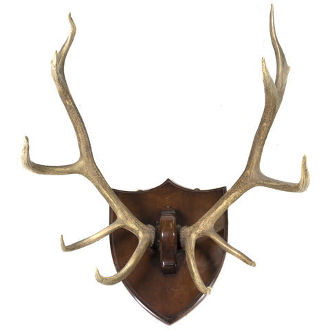 Monumental 10-Point Elk Mount on Heavy Shield Plaque