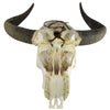 Large Steer Skull w/ Curved Black Horns