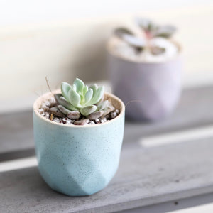 Succulents (set of 6), Centerpiece - Kesed creates