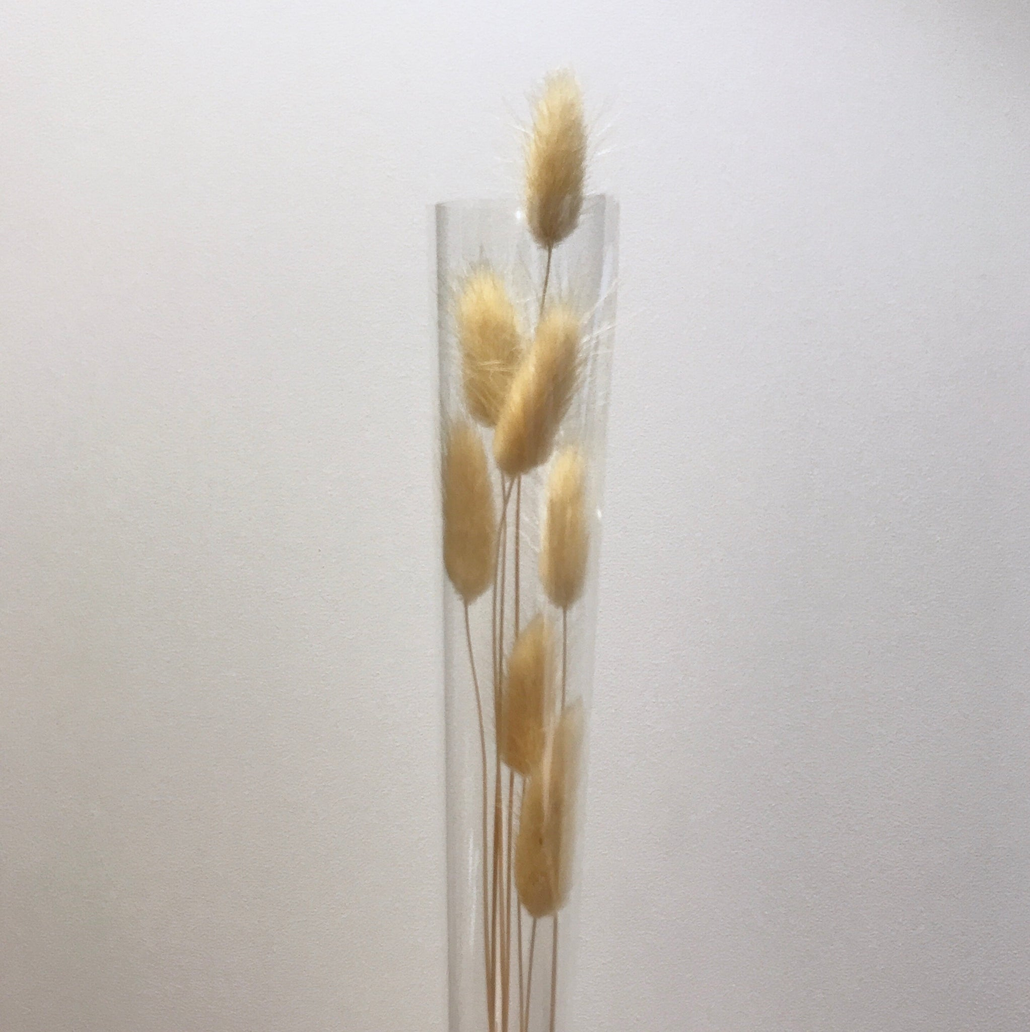 Bunny tails, Dried/ preserved - Kesed creates
