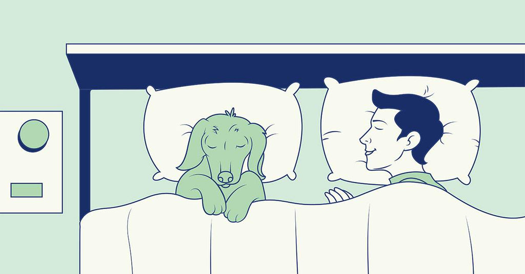 Should You Sleep with Your Pet? Health Risks & Benefits