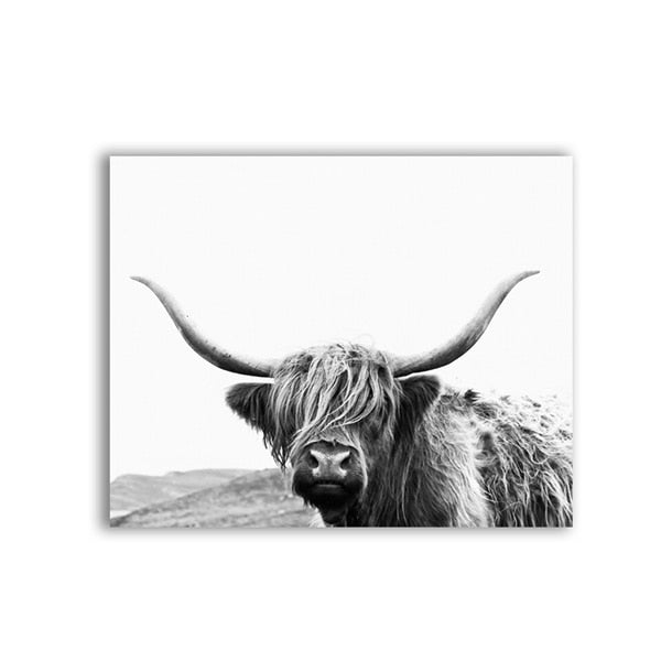 Highland Bull Photography Canvas