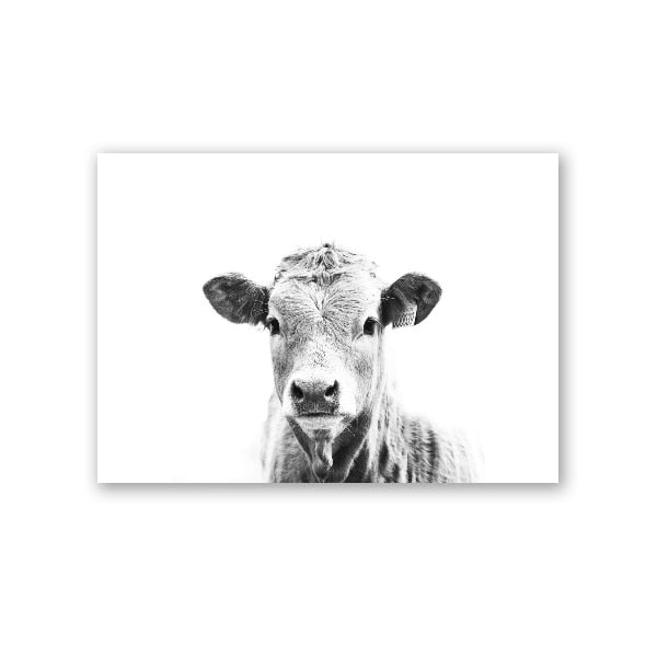 Black & White Cow Portrait