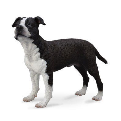 CollectA American Staffordshire Terrier