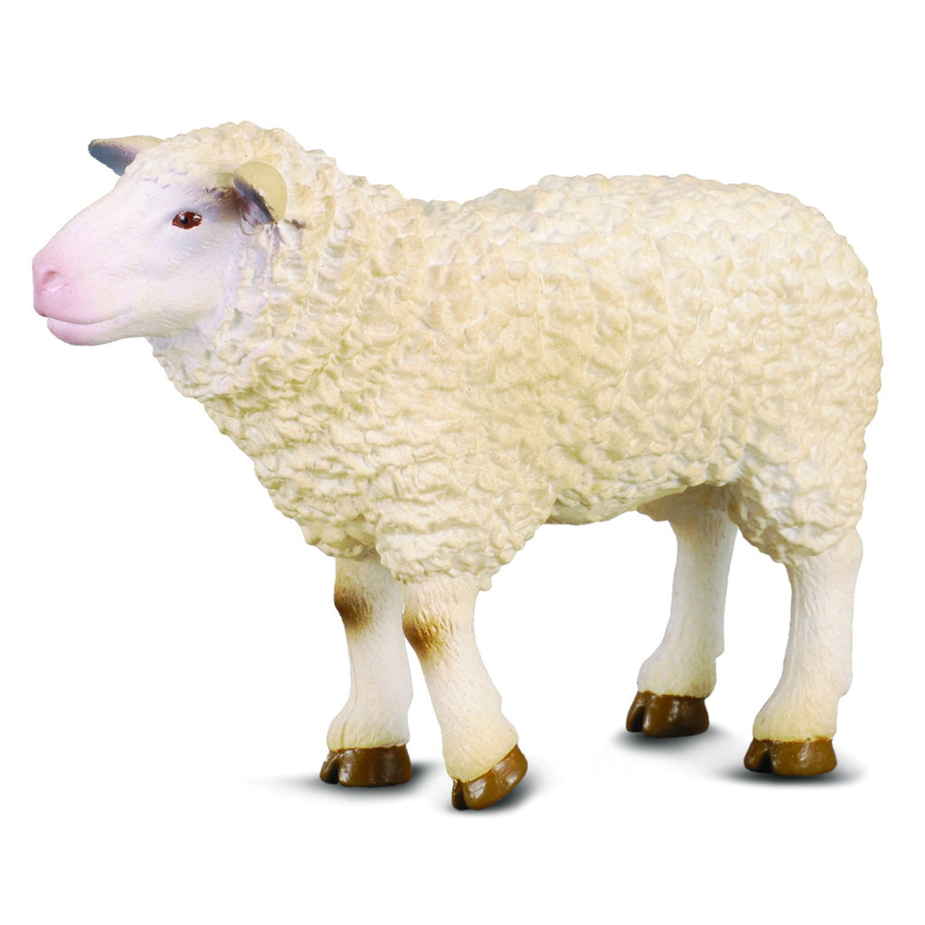 collecta schaap