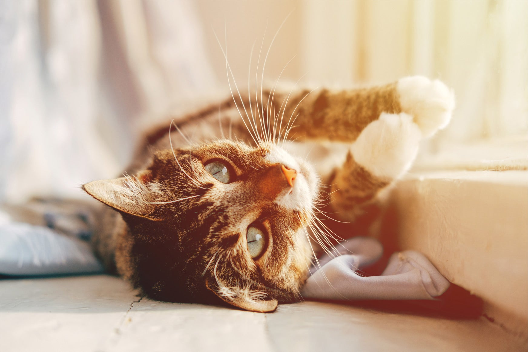 Best Food For Cats With Ibd Kohapet