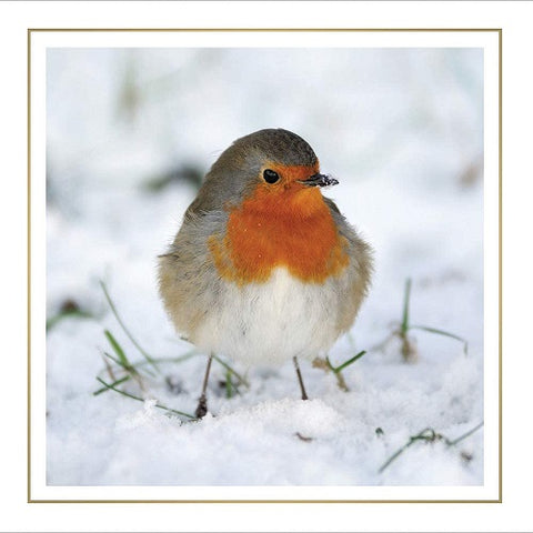 Charity Christmas Cards - Box of 6 Luxury Cards- Sold in Aid of RSPB