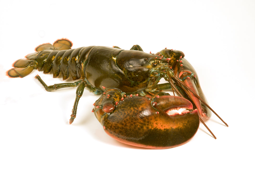 2 lb. Select Size Lobster Packages
