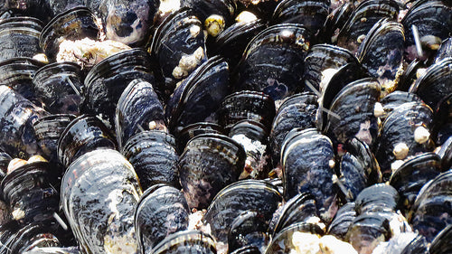 Mussels not available at this time