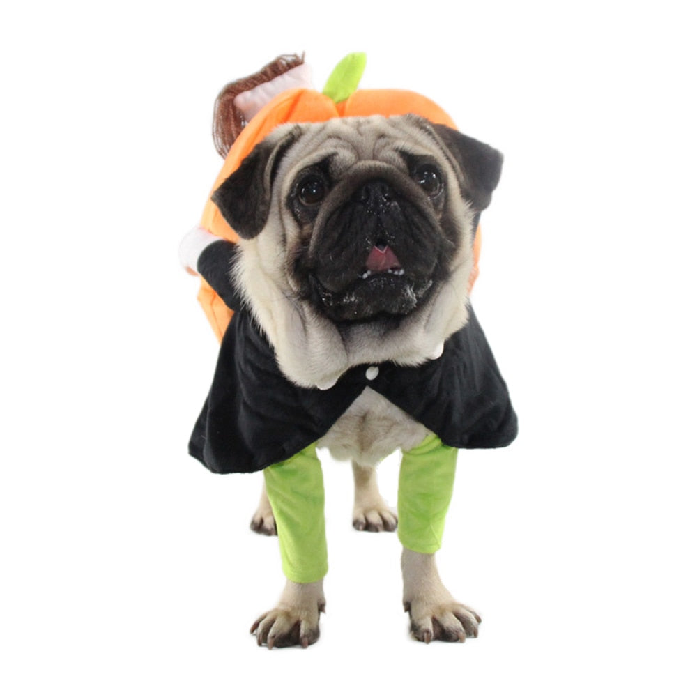 Funny Dog Cat Costume Pumpkin Cosplay Clothes