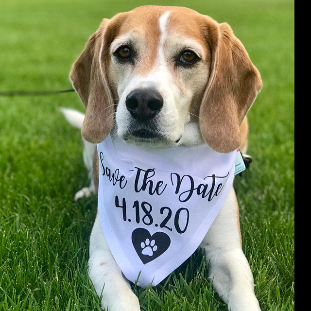 Personalize Big Sister Dog Bandana, Best Dog New Baby Reveal,Dog Pregnancy Announcement, New Baby Announcement bandanas