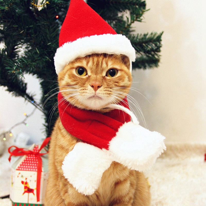 Cute Christmas Cat Hat And Neckerchief