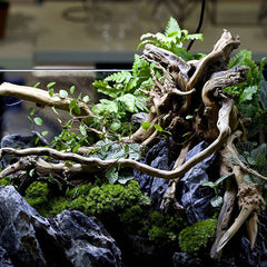 Image of 1PC Decorative Aquarium Fish Tank Plant Driftwood Fish Tank Natural Tree Trunk Driftwood Aquarium Decoration