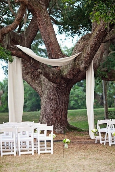 tree backdrop idea
