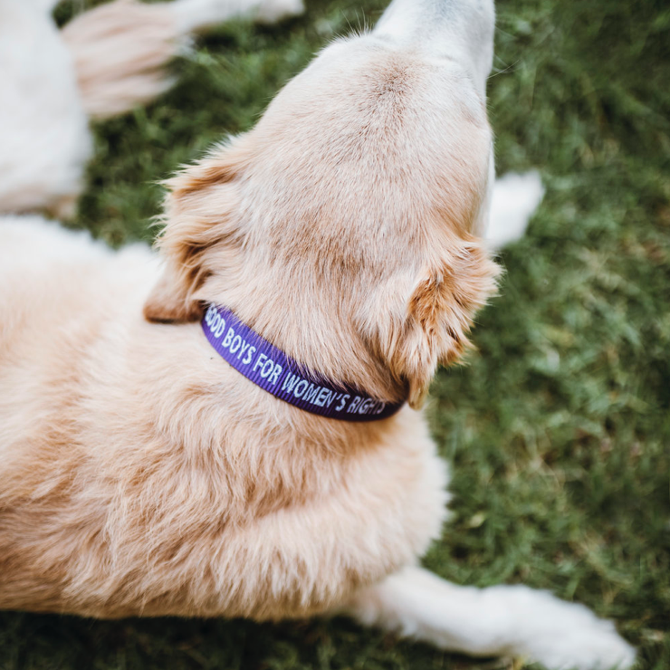 Good Boys For Women's Rights, Collar