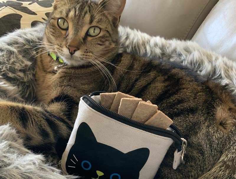 Cat sitting next to a black cat pencil case with treats in it