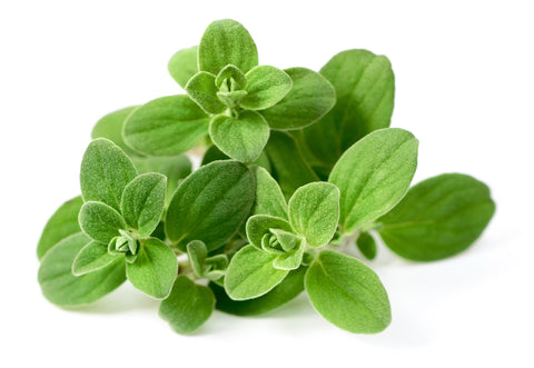 Marjoram herb for lymph cleanse