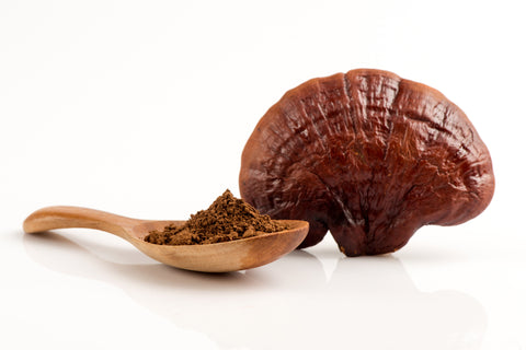Reishi for blood cleansing
