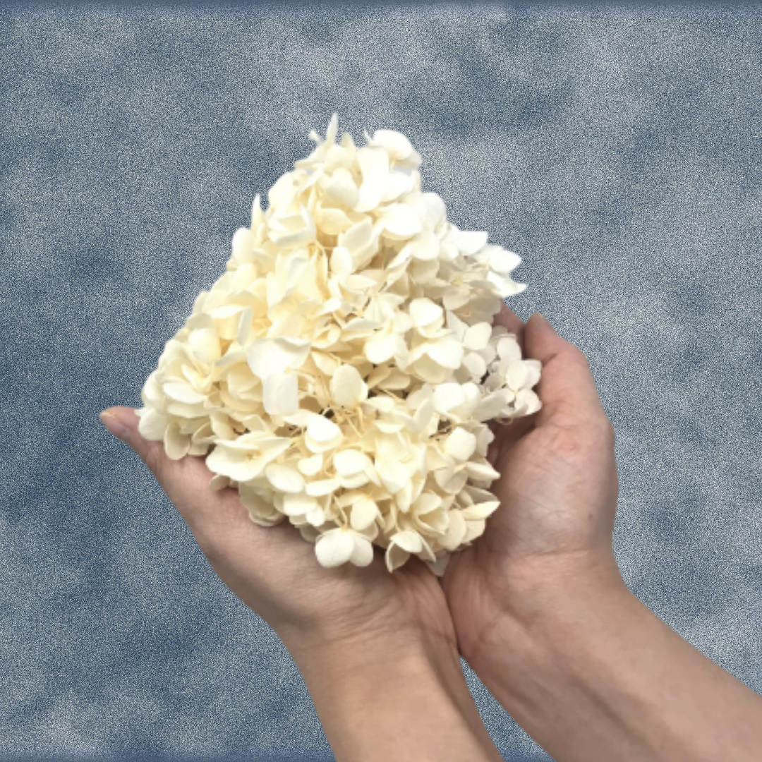 Box of Preserved Hydrangea Flower Petals - Cream