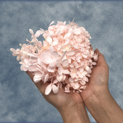 Box of Preserved Hydrangea Flower Petals - Pink