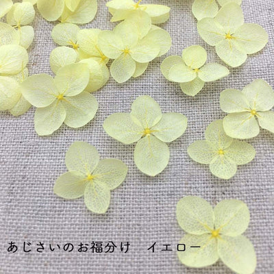 Preserved Hydrangea Flower Petals - Yellow