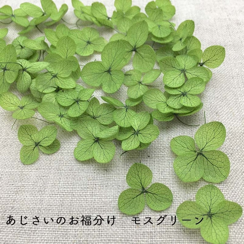 Preserved Hydrangea Flower Petals - Green