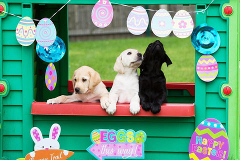 Dogs and Easter eggs