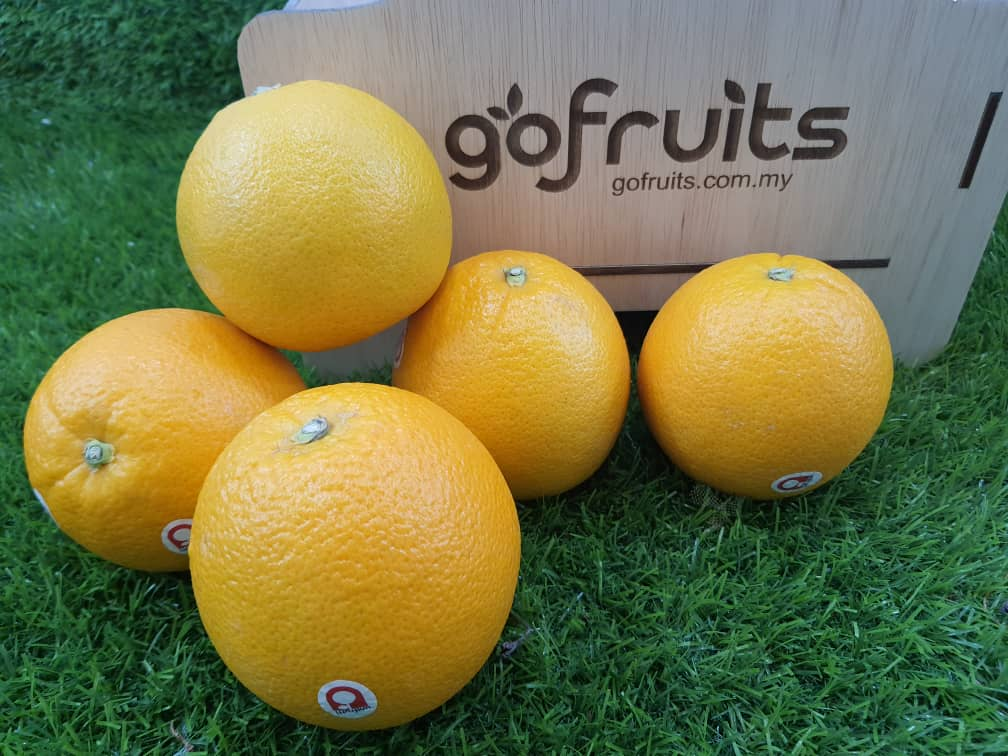 Autumn Gold Navel Orange (5pcs)