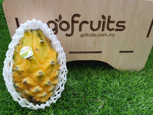 Equador Yellow Dragon Pitahaya  (1pcs)