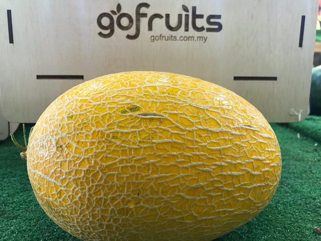 Golden Hami Melon (1pc) - (2.3kg to 2.5kg)
