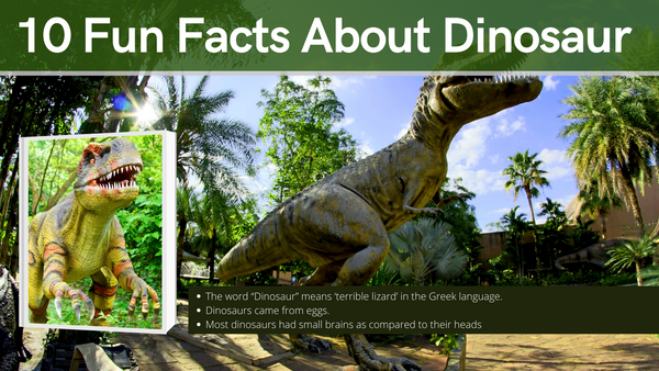 10 Fun facts about Dinosaur