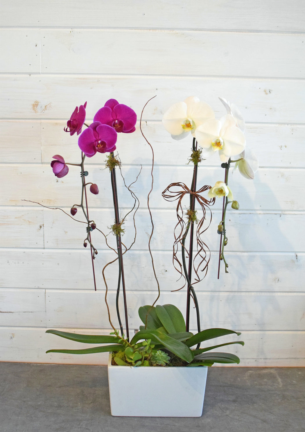 ORCHID DUO
