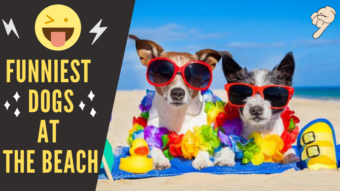 🤣 Funniest  🐶 Dogs At The Beach - Try Not To Laugh