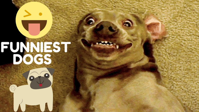 🤣 Funniest 🐶 Dogs And 😻Cats Try Not To Laugh - Best Of The Funny Tik Tok Videos