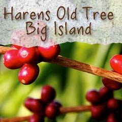 Haren's Old Tree Kona Estate Coffee